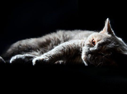 cat-3660165_1920